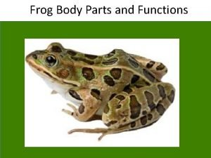 Frog Body Parts and Functions External Anatomy of