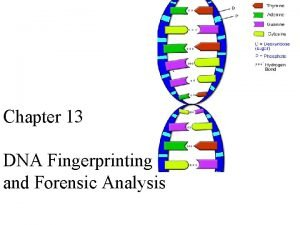 Chapter 13 DNA Fingerprinting and Forensic Analysis Forensic