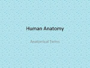 Human Anatomy Anatomical Terms Definitions Anatomy Deals with