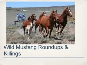 Wild Mustang Roundups Killings Wild Horses A Mustang