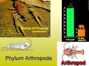 Phylum Arthropoda 1 Arthropoda jointed legs A Segmented