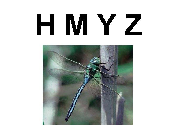 HMYZ Pro je hmyz dleit Ekologicky velmi variabiln