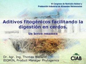 Aditivos fitognicos facilitando la digestin en cerdos Un