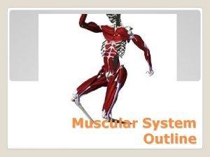 Muscular System Outline 1 Skeletal Voluntary responsible for