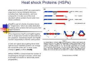 Heat shock Proteins HSPs n Heat shock proteins