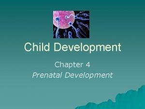 Child Development Chapter 4 Prenatal Development Chapter 4