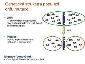 Genetick struktura populac drift mutace Drift diferenciace subpopulac
