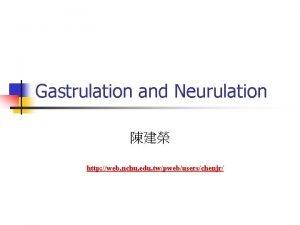 Gastrulation and Neurulation http web nchu edu twpwebuserschenjr