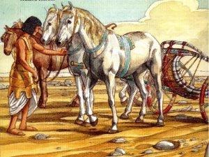 A FORA DE UM CAVALO Certo fazendeiro possua