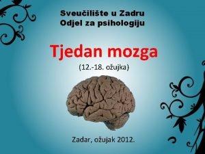 Sveuilite u Zadru Odjel za psihologiju Tjedan mozga