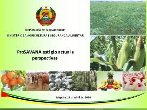 Pro SAVANA estgio actual e perspectivas Maputo 19
