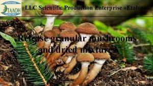 LLC Scientific Production Enterprise Etalon Release granular mushrooms
