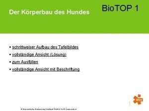 Bio TOP 1 Der Krperbau des Hundes schrittweiser