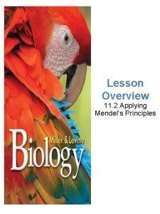 Lesson Overview 11 2 Applying Mendels Principles Applying
