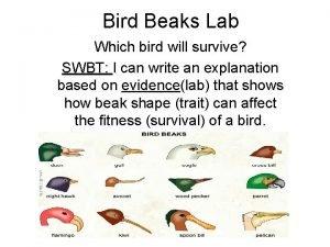 Bird Beaks Lab Which bird will survive SWBT