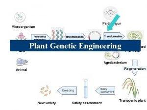 Plant Genetic Engineering Genetic Engineering The process of