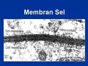Membran Sel 1 Semua sel mempunyai membran sel