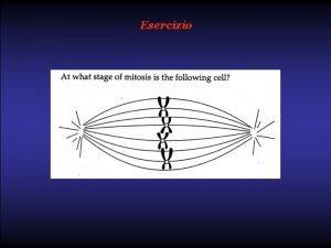 Esercizio Esercizio Metaphase SIMBOLOGIA Spiegazione logica Spiegazione logica