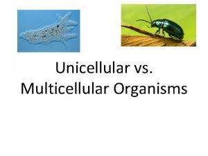 Unicellular vs Multicellular Organisms Unicellular vs Multicellular Organisms