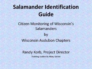 Salamander Identification Guide Citizen Monitoring of Wisconsins Salamanders