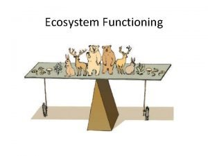 Ecosystem Functioning Richness Ecosystem Functioning Abundance Body mass