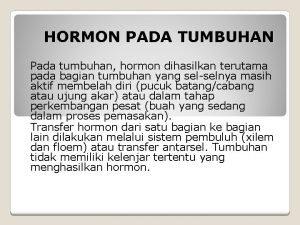 HORMON PADA TUMBUHAN Pada tumbuhan hormon dihasilkan terutama