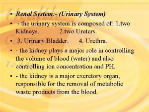 Renal System Urinary System the urinary system is