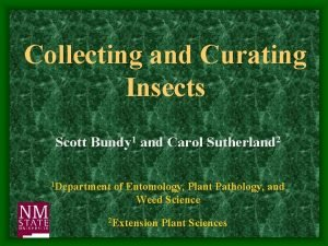 Collecting and Curating Insects Scott Bundy 1 and