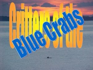 Blue Crab Blue crabs are not only the