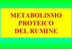 METABOLISMO PROTEICO DEL RUMINE METABOLISMO DELLE SOSTANZE AZOTATE