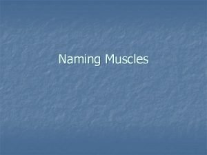 Naming Muscles Muscles causing movement n Skeletal Muscle