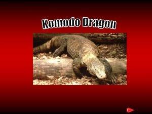 Komodo Dragon The komodo dragon moves by moving