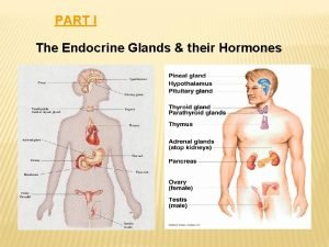 PART I The Endocrine Glands their Hormones The