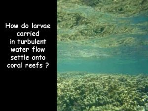 How do larvae carried in turbulent water flow