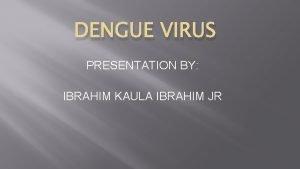 DENGUE VIRUS PRESENTATION BY IBRAHIM KAULA IBRAHIM JR