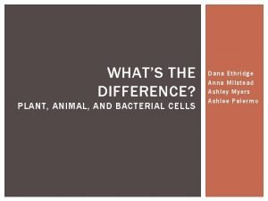 WHATS THE DIFFERENCE PLANT ANIMAL AND BACTERIAL CELLS