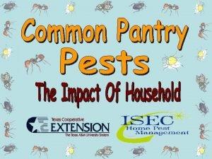 Identify Properly identify the pest Sanitize Clean on
