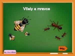 Vely a mravce Mgr Viera Vrlkov Hdanky Klikni