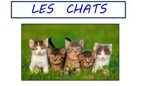 LES CHATS 1 Introduction Le chat domestique est