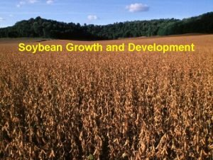 Soybean Growth and Development http corn agronomy wisc