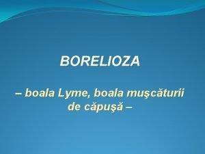 BORELIOZA boala Lyme boala mucturii de cpu Etiologie