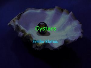 Oysters Emilie Blotiau Scientific Name Oysters scientific name