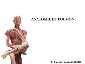 ANATOMIE DU POUMON Dr Grigoroiu Mondor 26 01