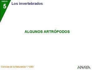 UNIDAD 5 Los invertebrados ALGUNOS ARTRPODOS Ciencias de