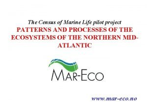 The Census of Marine Life pilot project PATTERNS
