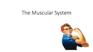 The Muscular System The muscular system works with