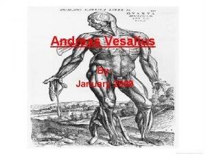 Andreas Vesalius By January 2009 Early Life Born