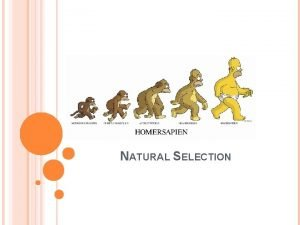 NATURAL SELECTION THE THEORY OF EVOLUTION EVOLUTIONARY IDEAS