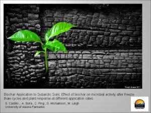 Google images 2011 Biochar Application to Subarctic Soils