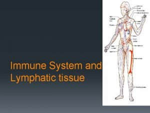 Immune System and Lymphatic tissue Organs in the